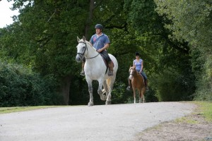 horse riding new forest - Forest Gate Lodge new forest activities