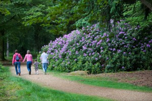 Things To Do In The New Forest Including Cycling Walking Golf
